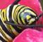 1-caterpillar-pictures-s