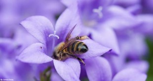 bee-by-james-petts