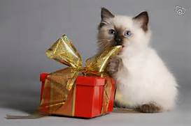 siamesewithpresents