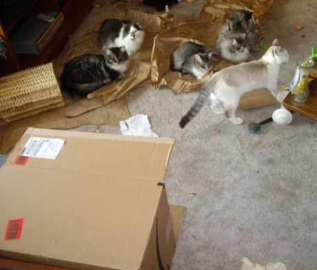 From left to right -  Stink Butt, Fluffy, Harri, Downey(on the paper) and Bare Bear (standing)