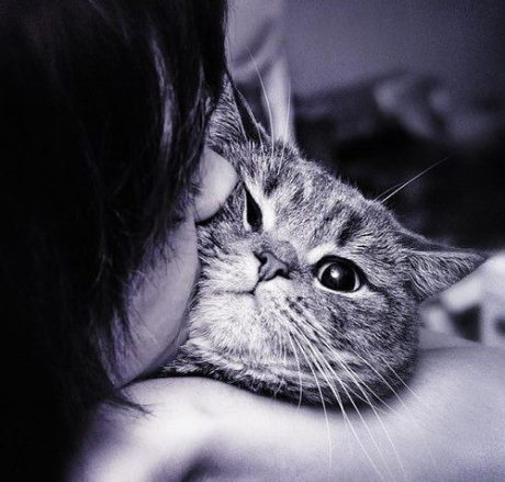 cat-kiss-favim-com