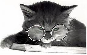 catnglasses