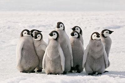 penguin2-oceana-org