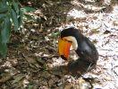 toucan2