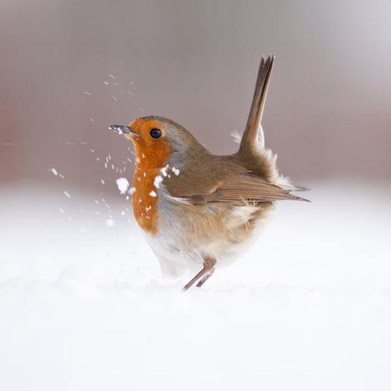 BirdFluff
