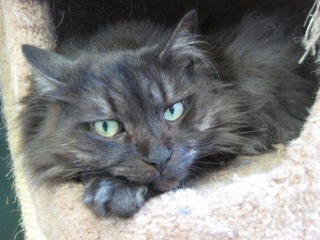 Cat-Winston