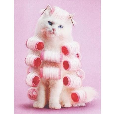 curly-cat