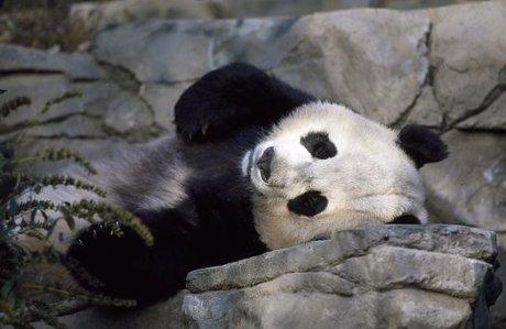PANDA-SLEEP