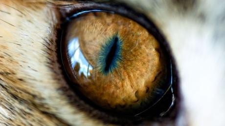Cat-Eye-