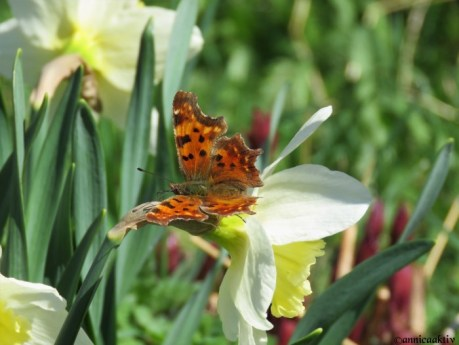 ButterflyHaiku