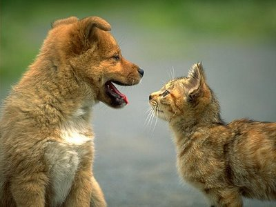CatDogTalking