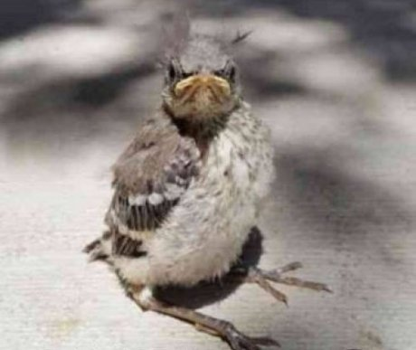Devil-Bird