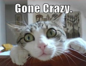 Cat-Gone-Crazy-