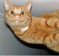 CatSmiling