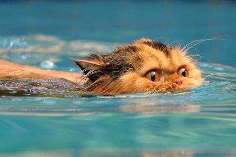 CatSwimming2