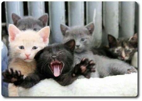 CatWantsOut