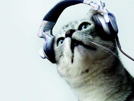 catwithearphones