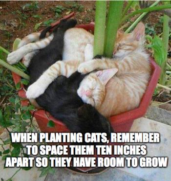 Catz-in-a-pot
