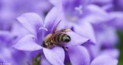 bee-by-James-Petts-