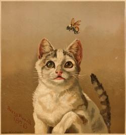 Bee&Cat