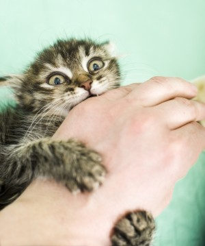 CatBitingHand