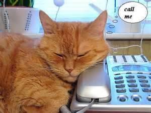 CatCallMe