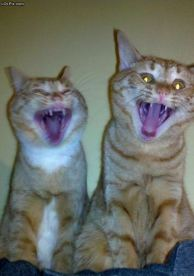 CatsLaughing2