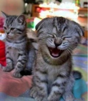 CatsLaughing3