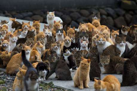 Group-of-Catz