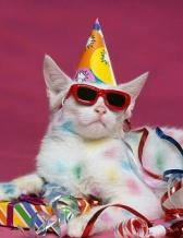 PartyCat2
