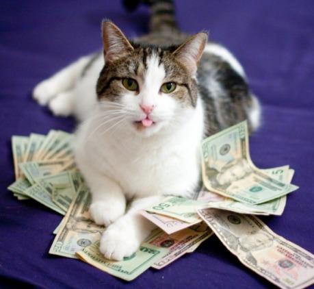 rich_cat