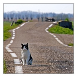 RoadCat