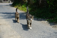 Cats walking on road
