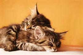 TwoCatsSleeping