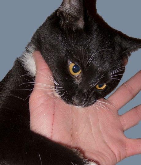 CatBiting