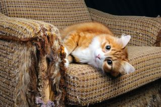 CatScratch1