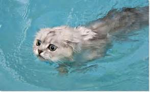 catSwimming