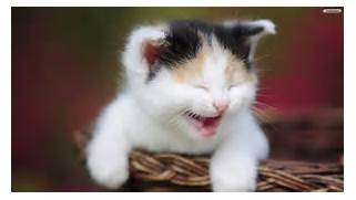 CatLaughing2