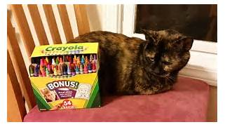 CatwithCrayons