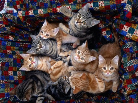 manycats