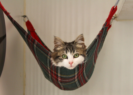 cat-sitting-in-hammock