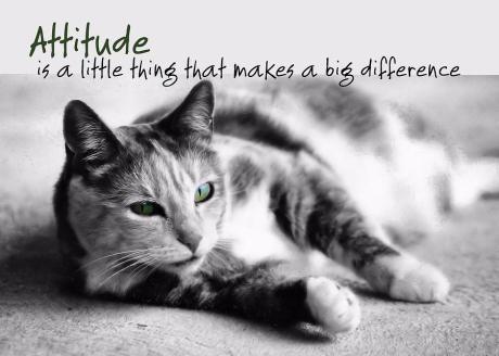 Catattitude